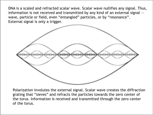 DNA is a scaled and refracted scalar wave.