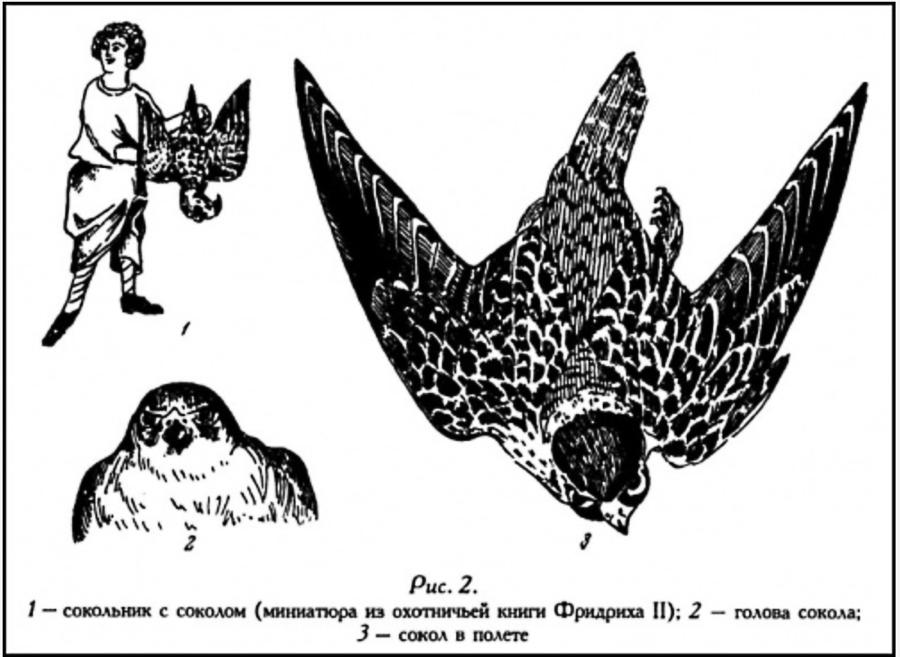 Изображённые птицы не могут быть ни голубями, ни воронами, ни ястребами, ни орглами. У орла и ястреба